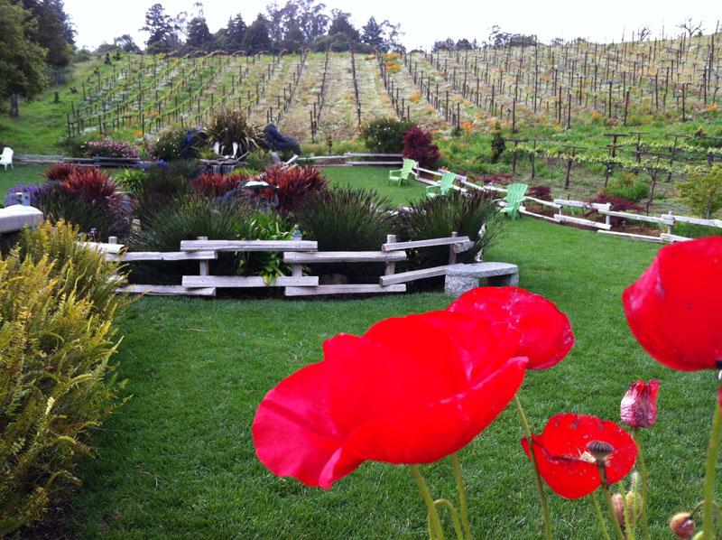 vineyard6 - Capitola Soquel Chamber of Commerce Capitola, CA