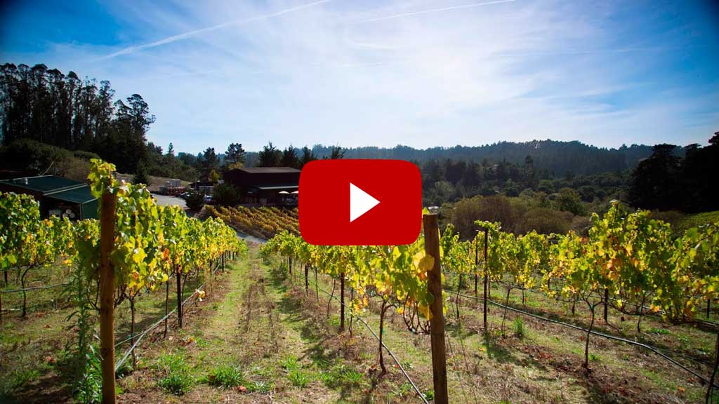 Santa Cruz County Wine - From Grape to Glass