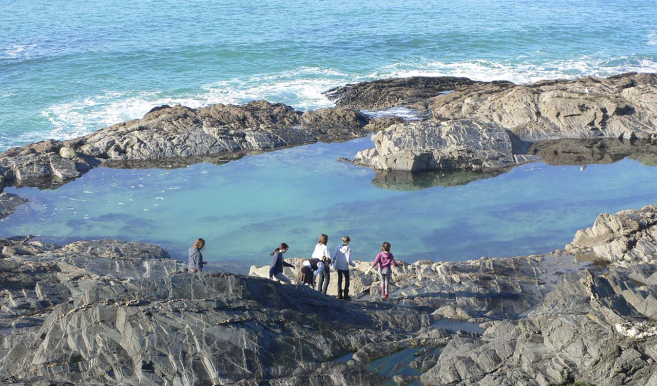 Tide Pool Exploring - Capitola-Soquel Chamber of Commerce