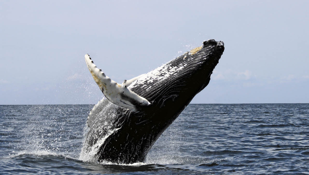 Whale Watching - Capitola-Soquel Chamber of Commerce